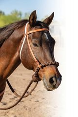 Loping hackamore Professional's Choice Schutz
